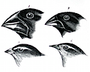 finches.png